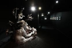 mocquet-musee-chasse-nature-2017-13-38e7f94f382cdf4ff626a0e91bc9d5d7